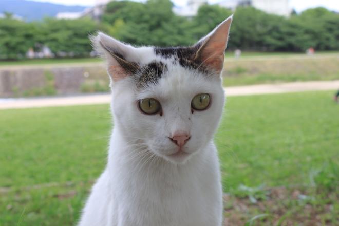 s10-shiro8343.jpg
