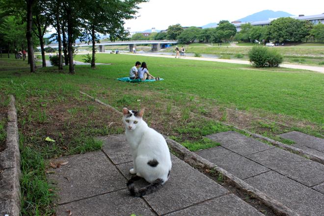 s10-shiro8371.jpg