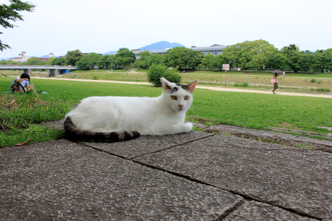 s10-shiro8434.jpg