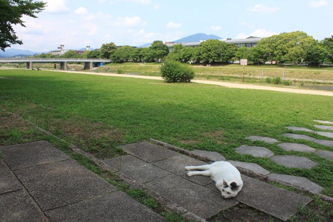 s10-shiro8578.jpg