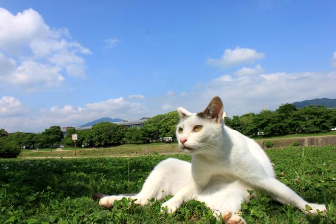 s10-shiro8733.jpg