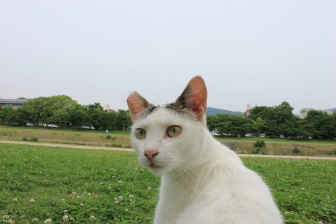 s10-shiro8776.jpg