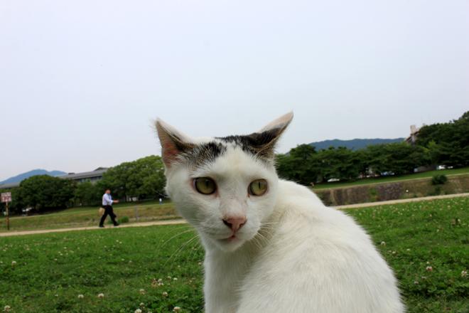 s10-shiro8777.jpg