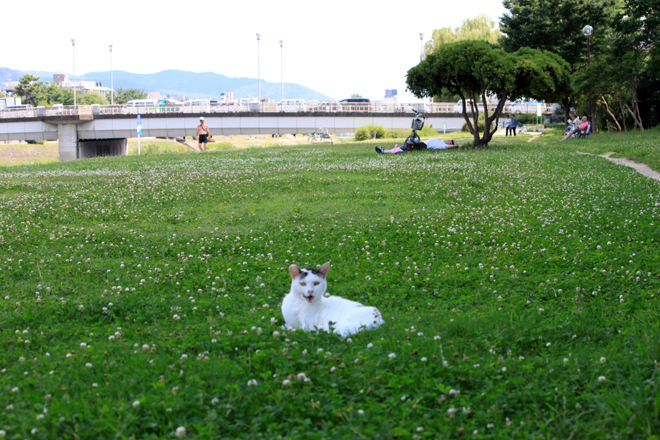 s10-shiro9648.jpg