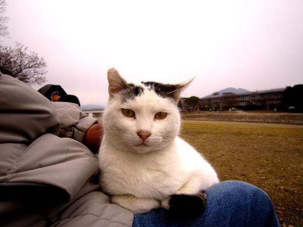 s10-shiro9744.jpg