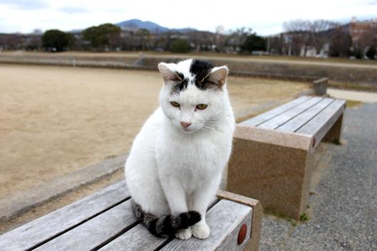 s8-shiro-j3463.jpg