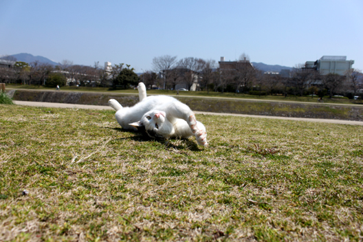 s8-shiro0018e.jpg