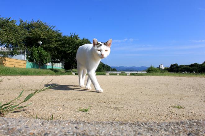 shiro-s10-0521.jpg