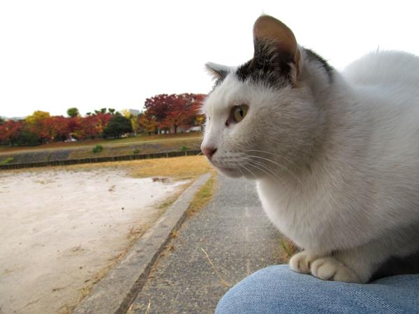 shiro-s10-n9835x.jpg