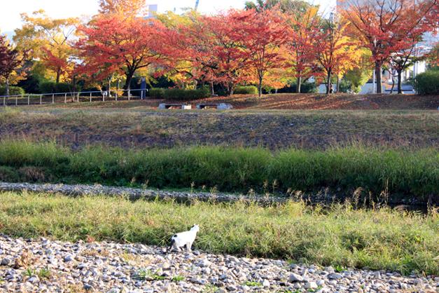 shiro-s9-k2039.jpg