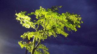 闇の中の木