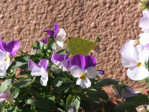 butterfly_convert_20101203124751.jpg