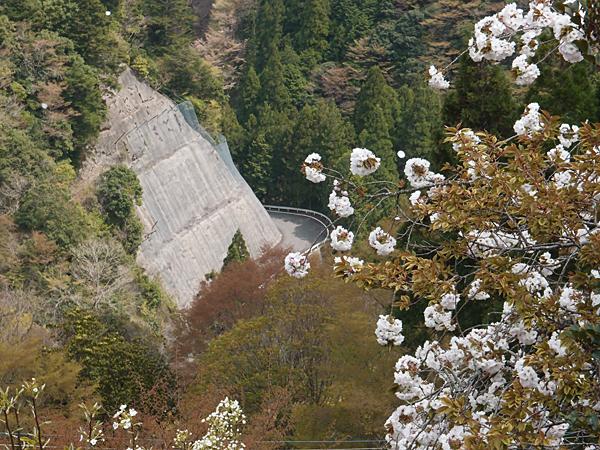 425号線からの桜
