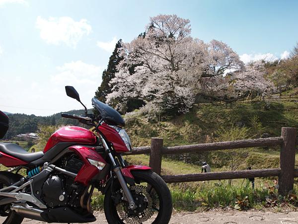 ER-4n千年桜横