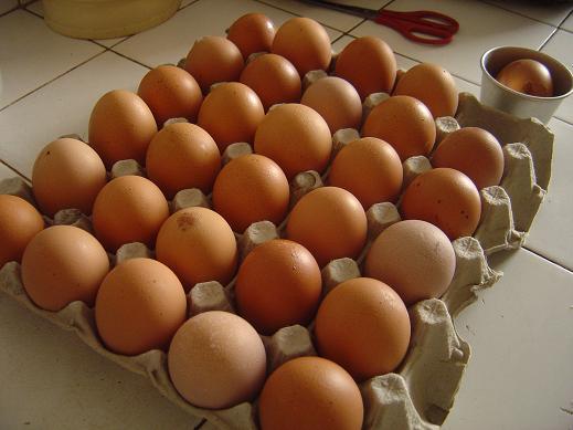 egg30.jpg