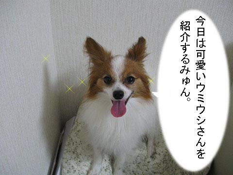 うみうし3