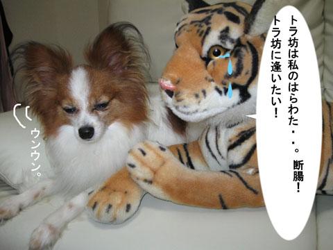 とらぼ12_edited-1