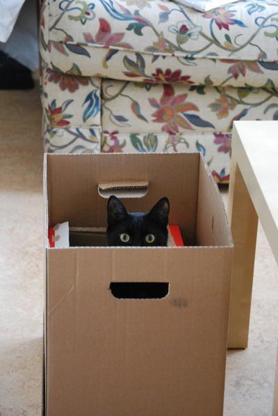 箱入りです