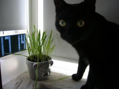猫草とはなこさん