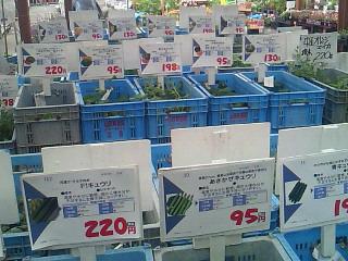moblog_ba83d9a1.jpg