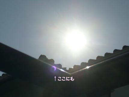 1205011.jpg