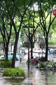 都会の欅と雨_800