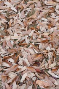 秋も終わるね。_800