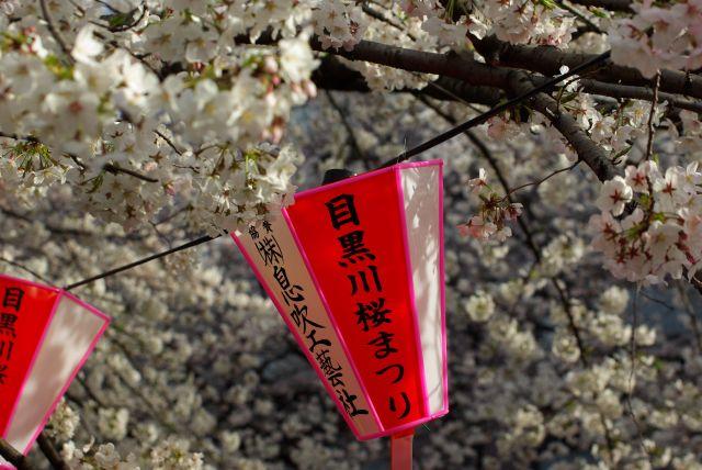 お花見・上野目黒川 859