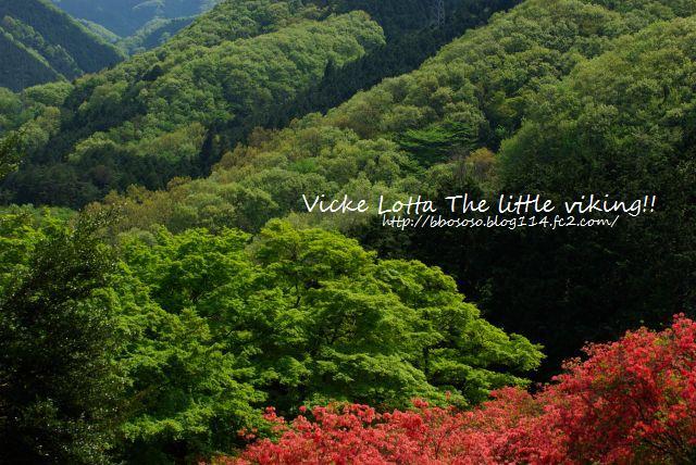 タケノコ堀&金尾山 076