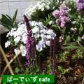 夏向け花壇