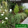 花壇12夏
