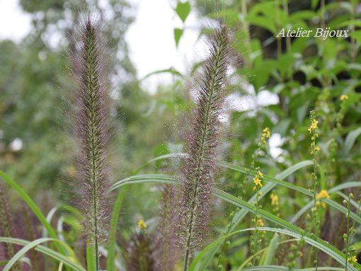 068-植物