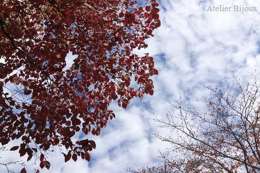 060-紅葉