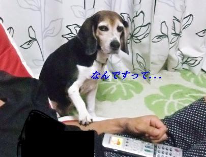 コピー ~ DSCF1679
