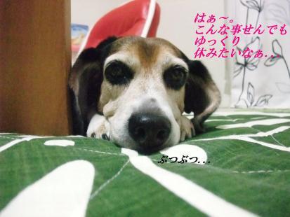 コピー ~ DSCF1792