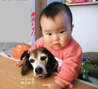 コピー ~ DSCF2200