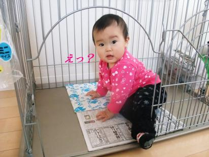 コピー ~ DSCF2429