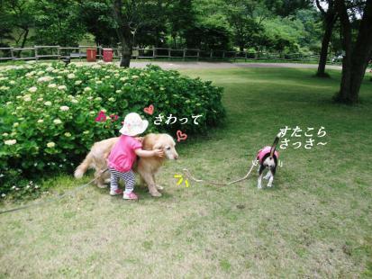 コピー ~ DSCF3168