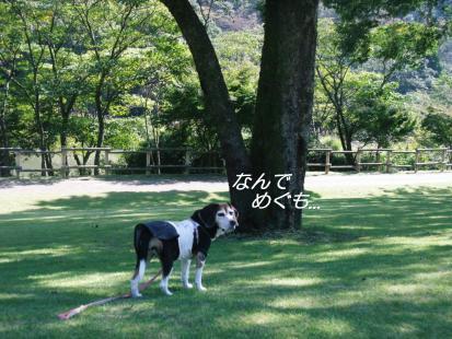 コピー ~ DSCF3525