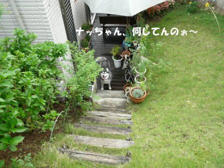 20110904_10.jpg