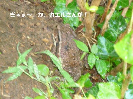 20110911_1.jpg