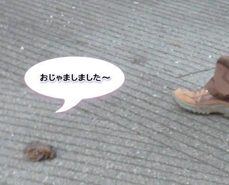 20110911_2.jpg