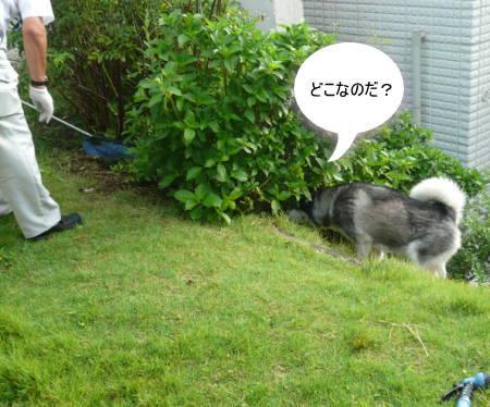 20110916_2.jpg