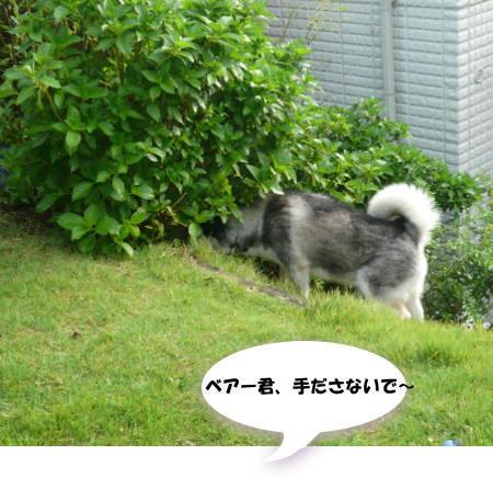 20110916_6.jpg