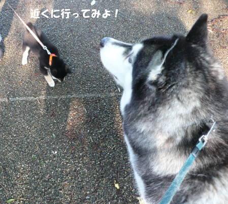 20111019_2.jpg