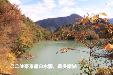 20111113_3.jpg