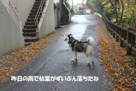 2011112019_2.jpg