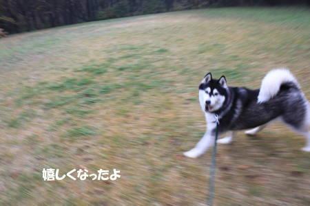 2011112019_5.jpg