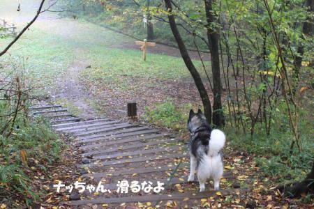 2011112019_7.jpg