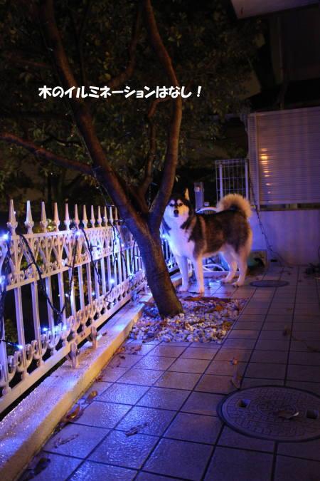 20111203_2.jpg